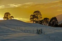 Sole di inverno della regolazione sopra i campi nevosi Fotografia Stock
