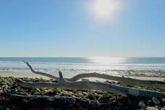 Sole di legno dell'oceano della deriva Immagini Stock