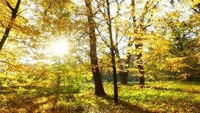 Sole di legno delle foglie di autunno video d archivio