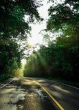 Sole di mattina che splende attraverso i rami sulla strada campestre Fotografie Stock
