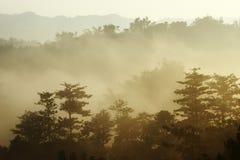 Sole di mattina con nebbia immagini stock