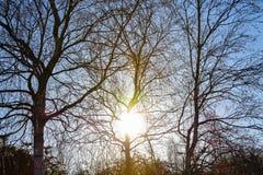 Sole di mattina nell'inverno BRITANNICO Immagini Stock
