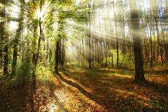 Sole di mattina nella foresta di autunno Fotografia Stock