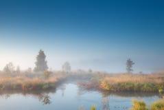 Sole di mattina sopra la palude nebbiosa Immagini Stock
