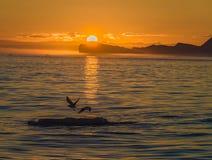 Sole di mezzanotte sopra gli iceberg alla bocca del Iceford, Ilulissat, Groenlandia fotografia stock libera da diritti