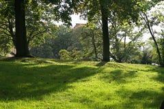 Sole di primavera in parco Immagine Stock