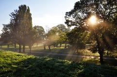 Sole di primo mattino Fotografie Stock Libere da Diritti