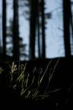 Sole di primo mattino attraverso gli alberi Fotografie Stock Libere da Diritti
