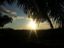 Sole di sera nell'isola del Borneo Fotografia Stock