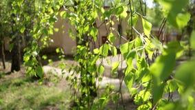 Sole di verde di mattina della foresta stock footage
