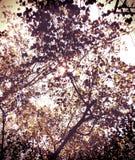 Sole e foglia Fotografie Stock