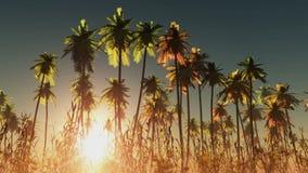 Sole e palme d'ardore della nebbia illustrazione di stock