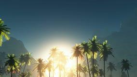 Sole e palme d'ardore della nebbia royalty illustrazione gratis