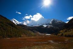 Sole ed erba della neve Immagine Stock