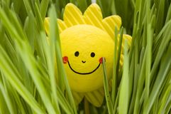 Sole felice Immagini Stock Libere da Diritti