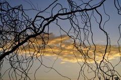 Sole, felicità Fotografia Stock Libera da Diritti