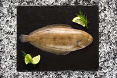 Sole fish on ice on a black stone plate Stock Photography