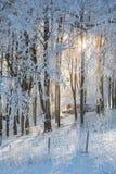 Sole in foresta Immagine Stock Libera da Diritti