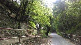 Sole in foresta Immagine Stock