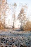 Sole gelido dell'erba di mattina Fotografia Stock
