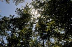 Sole luminoso che splende attraverso gli alberi immagine stock libera da diritti