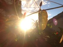 Sole luminoso di estate Fotografia Stock Libera da Diritti
