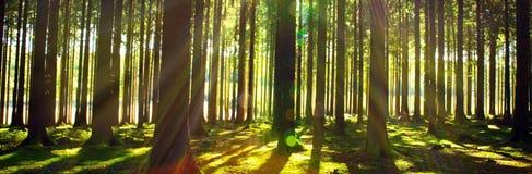 Sole luminoso nella foresta fotografie stock