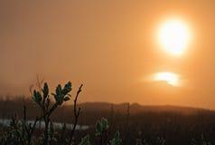 Sole Midnight Immagine Stock Libera da Diritti