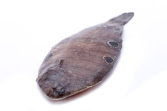 Sole moles. A sole fresh with many moles on his back Stock Images