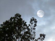 Sole nascosto con gli alberi Fotografia Stock