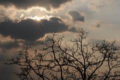 Sole radiante, nubi pesanti, siluetta dell'albero fotografie stock libere da diritti