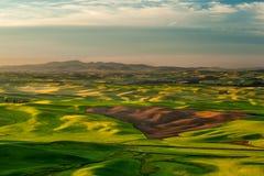 Sole sopra i campi del raccolto in colline di Palouse Immagine Stock Libera da Diritti