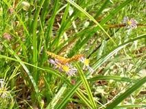 Sole sulla farfalla immagine stock