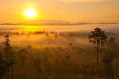 Sole sulla foschia di mattina Fotografia Stock