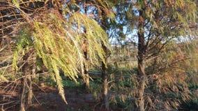 sole tramite le foglie Fotografie Stock Libere da Diritti