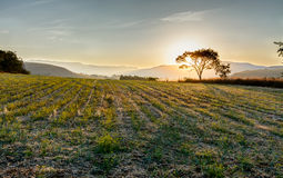 Sole tree in a sunset Royalty Free Stock Photography