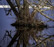 Sole tree trying to survive the flood waters. stock photo