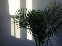 Sole tropicale Fotografia Stock Libera da Diritti
