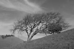 soledad Fotografía de archivo libre de regalías