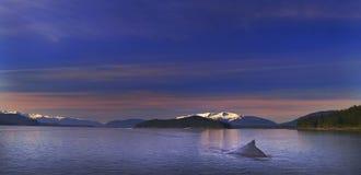 Soledad del Humpback Imagen de archivo