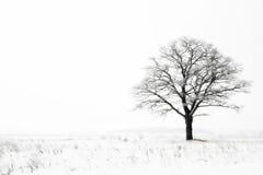 Soledad del invierno Fotografía de archivo libre de regalías