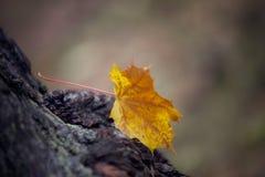 Soledad del otoño Fotografía de archivo libre de regalías