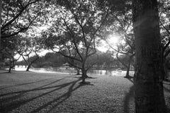Soledad en el jardín Imagen de archivo
