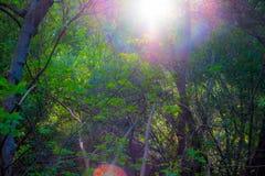 Soleil à la forêt avec des arbres photographie stock