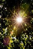 Soleil Photos libres de droits