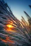 soleil Photo stock