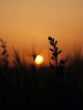 soleil Photographie stock libre de droits