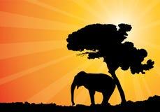 soleil africain illustration stock