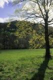Soleil, arbre, pré photographie stock
