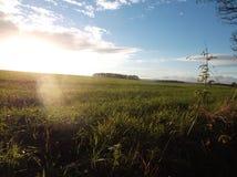 Soleil au-dessus de taillis et de champ Photographie stock